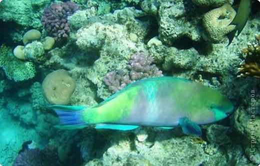 Коралловые рифы фото 1