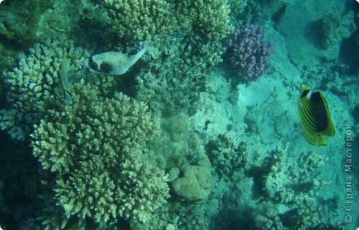 Коралловые рифы фото 3