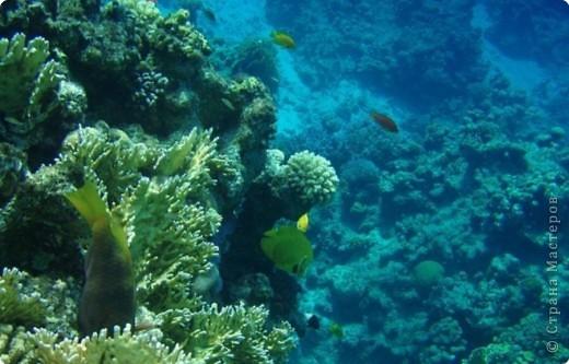 Коралловые рифы фото 2