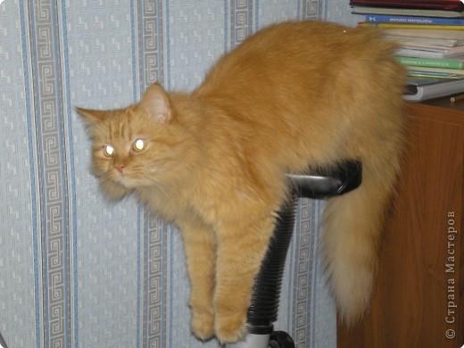Знакомтесь. Это наш Бася. Самый главный в доме. Одним словом - ХОЗЯИН! фото 4