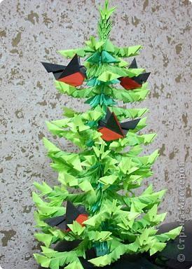 Представляю вам мой ельничек... Вот такие я вырастила деревца...  Какие-то быстро выросли, а какие-то долго росли, но решила показать! фото 16