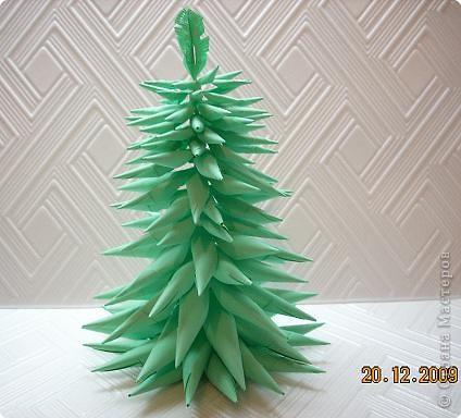 Представляю вам мой ельничек... Вот такие я вырастила деревца...  Какие-то быстро выросли, а какие-то долго росли, но решила показать! фото 7