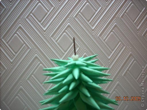 Представляю вам мой ельничек... Вот такие я вырастила деревца...  Какие-то быстро выросли, а какие-то долго росли, но решила показать! фото 8