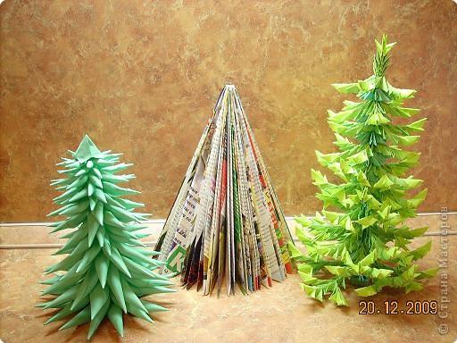 Представляю вам мой ельничек... Вот такие я вырастила деревца...  Какие-то быстро выросли, а какие-то долго росли, но решила показать! фото 2