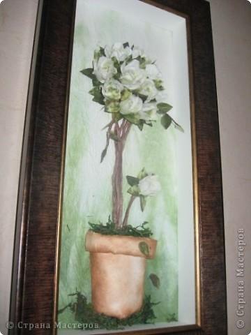 розы из ханди в горшке фото 1