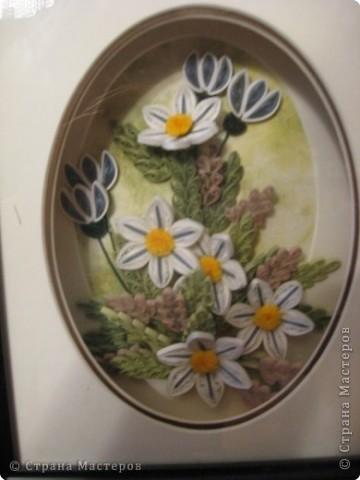 розы из ханди в горшке фото 3