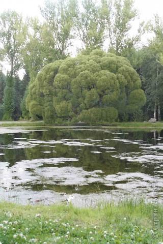 Предлагаю жителям и гостям Страны мастеров отдохнуть чуток и прогуляться по летнему парку моего города. фото 1