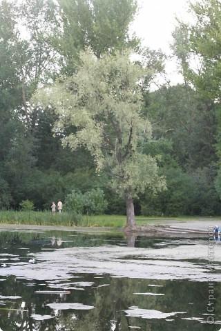 Предлагаю жителям и гостям Страны мастеров отдохнуть чуток и прогуляться по летнему парку моего города. фото 2