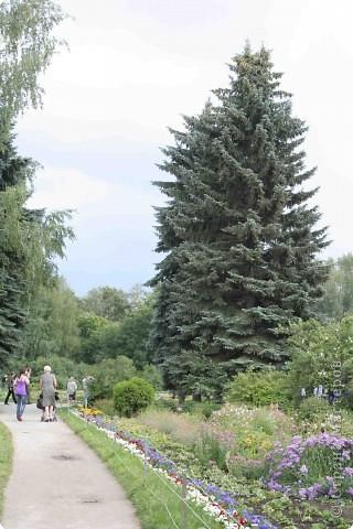 Предлагаю жителям и гостям Страны мастеров отдохнуть чуток и прогуляться по летнему парку моего города. фото 4