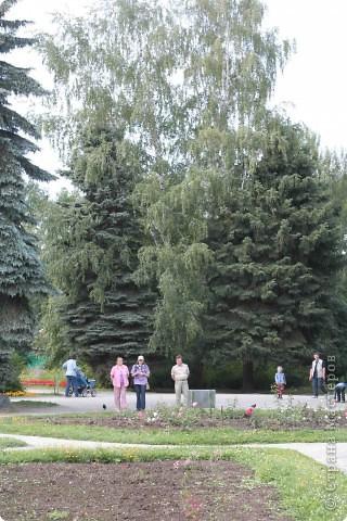 Предлагаю жителям и гостям Страны мастеров отдохнуть чуток и прогуляться по летнему парку моего города. фото 14