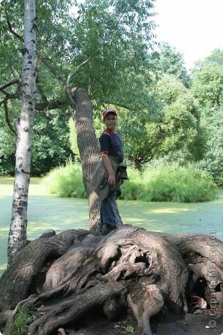 Предлагаю жителям и гостям Страны мастеров отдохнуть чуток и прогуляться по летнему парку моего города. фото 16