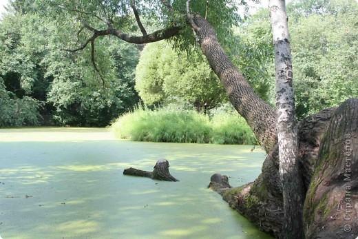 Предлагаю жителям и гостям Страны мастеров отдохнуть чуток и прогуляться по летнему парку моего города. фото 17