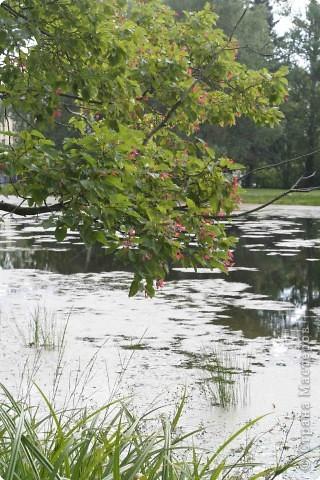 Предлагаю жителям и гостям Страны мастеров отдохнуть чуток и прогуляться по летнему парку моего города. фото 19