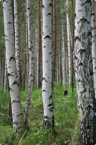 Летом,  всей семьей ездим на экскурсии по Уралу. У нас тоже есть на что посмотреть. Это одна из достопримечательностей нашего края. фото 10