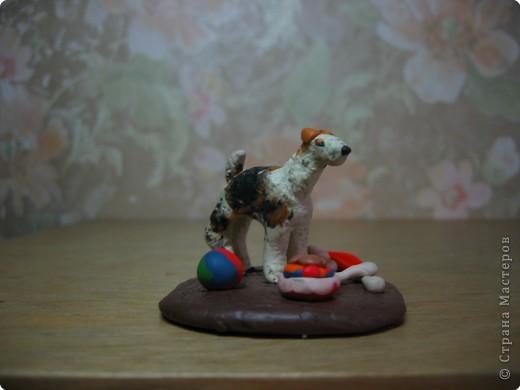 Собака. Порода Фокстерьер. фото 1