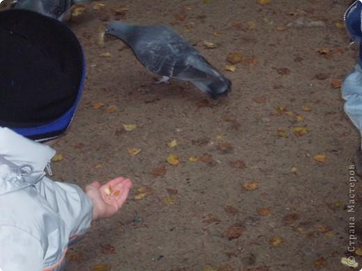 Слава начал с подкормки голубей фото 1