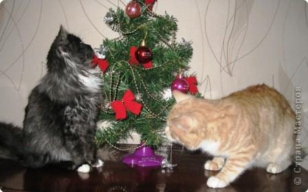 Знакомтесь. Шурик (рыжий) и Никикта. фото 15