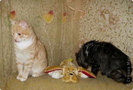 Знакомтесь. Шурик (рыжий) и Никикта. фото 5