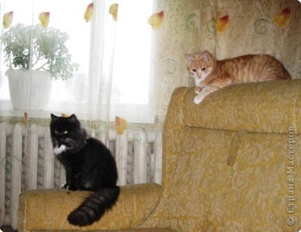 Знакомтесь. Шурик (рыжий) и Никикта. фото 1
