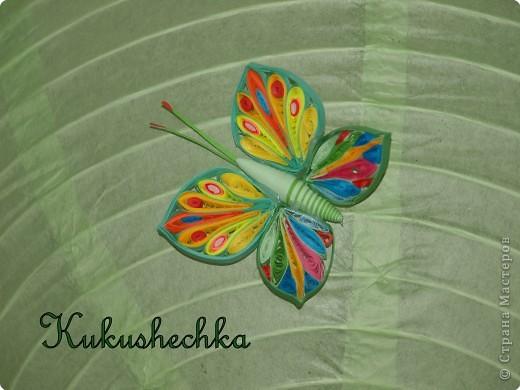 PA255472-1 Бабочка из бумаги в технике квиллинг