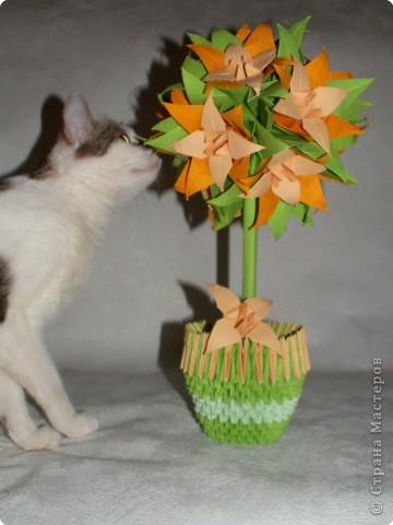 Оригами модульное: Лилейное дерево) фото 3
