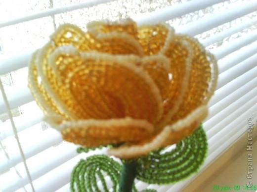 Бисероплетение: Цветы, цветы фото 5