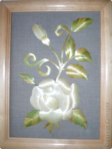 Зимняя роза Соломка