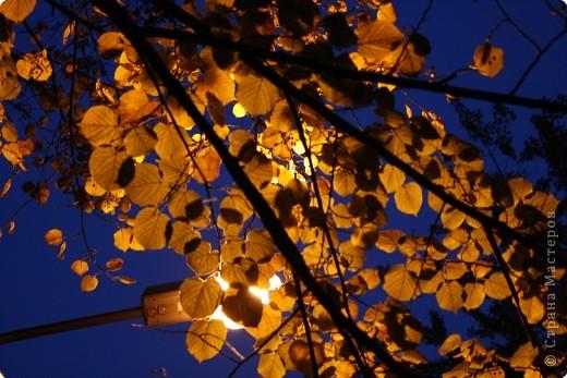 моё фото..... золотая осень во всей красе...
