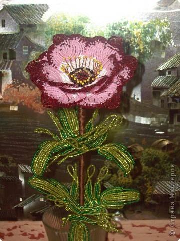 цветок анемон фото 1