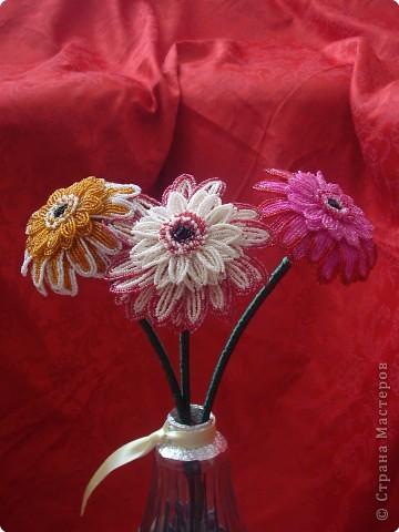 цветок анемон фото 3