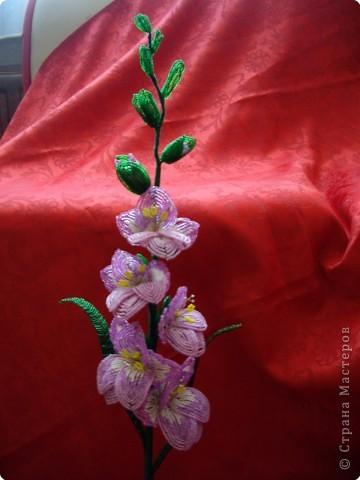 цветок анемон фото 4