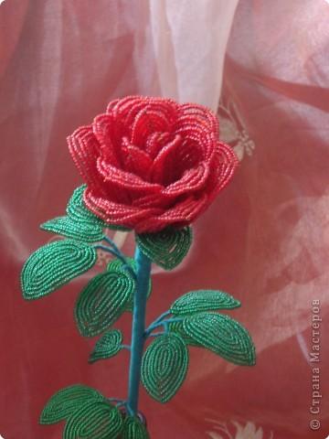 цветок анемон фото 5