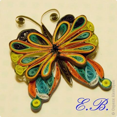 Бабочка № 1 фото 1