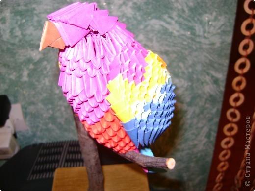 Оригами модульное: попугай Кеша