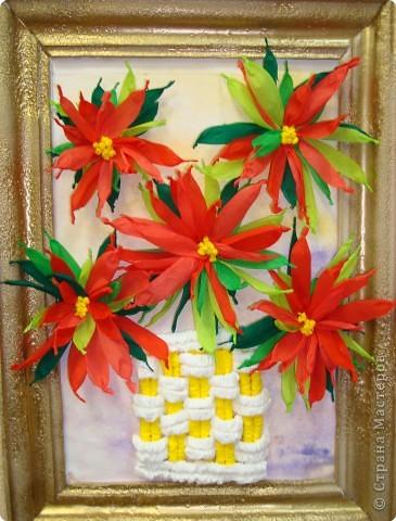 Рождественский цветок. ПУАНСЕТИЯ!