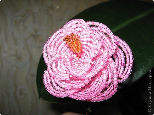 Мой первый опыт в плетении цветов. фото 2