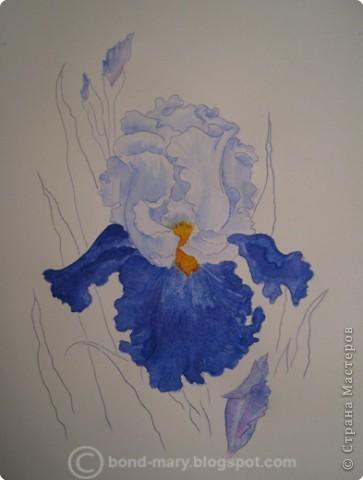 Рисование и живопись Ирис акварель - проба Акварель фото 2