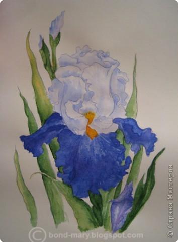 Рисование и живопись Ирис акварель - проба Акварель фото 1
