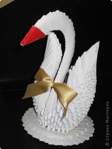 Мой первый лебедь))