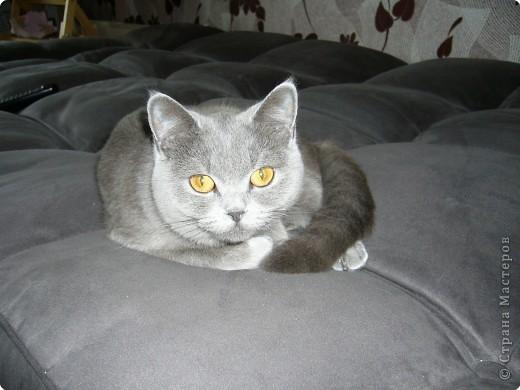 Знакомьтесь - это наша красавица Дымка! фото 2