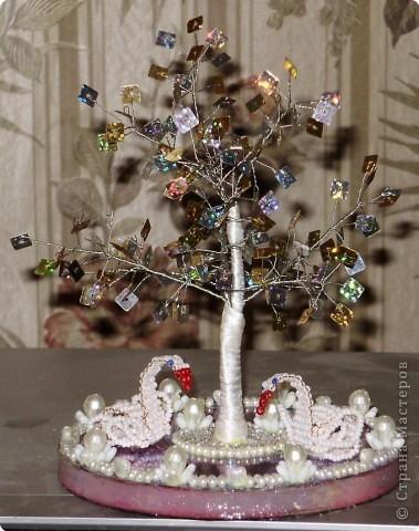 денежное дерево фото 5