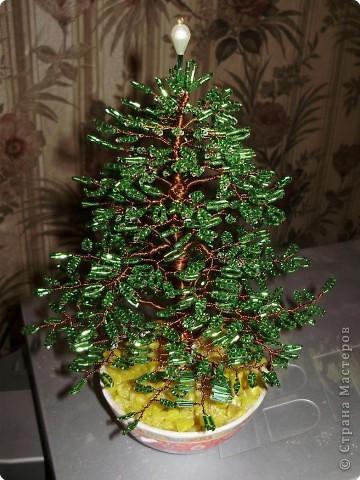 денежное дерево фото 6
