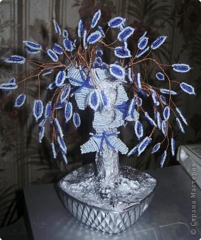 денежное дерево фото 12