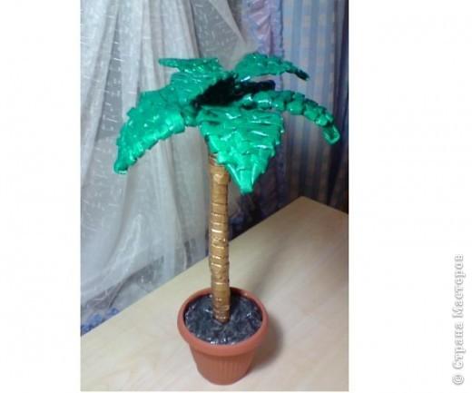 Газеты... Хотела сделать цветок, большой шибко получился. Вот так и родилась пальмочка.