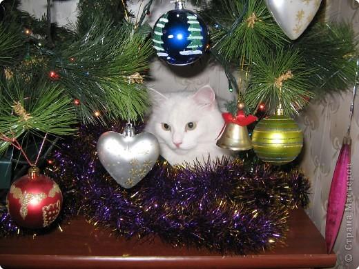 Кот вместо Дед Мороза.