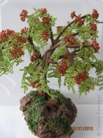 схемы деревья рябина