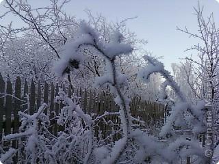 Зимние цветы фото 3