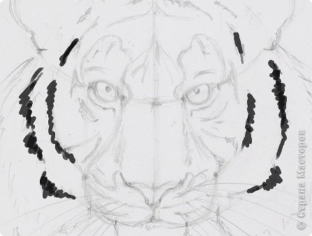 Готовый рисунок карандашом. фото 12