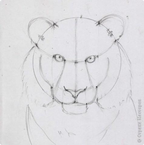 Готовый рисунок карандашом. фото 9