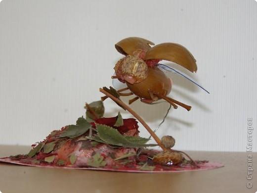 Стрекоза и жук неизвестной породы. фото 2